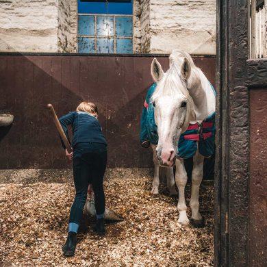 """Gli alloggi equestri con il marchio """"Accueil Cheval"""""""