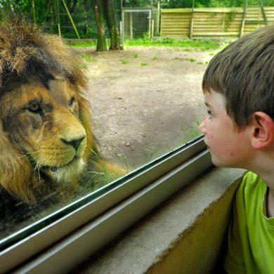 Zoo e parchi faunistici