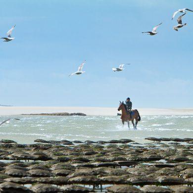 I grandi itinerari a cavallo in Normandia