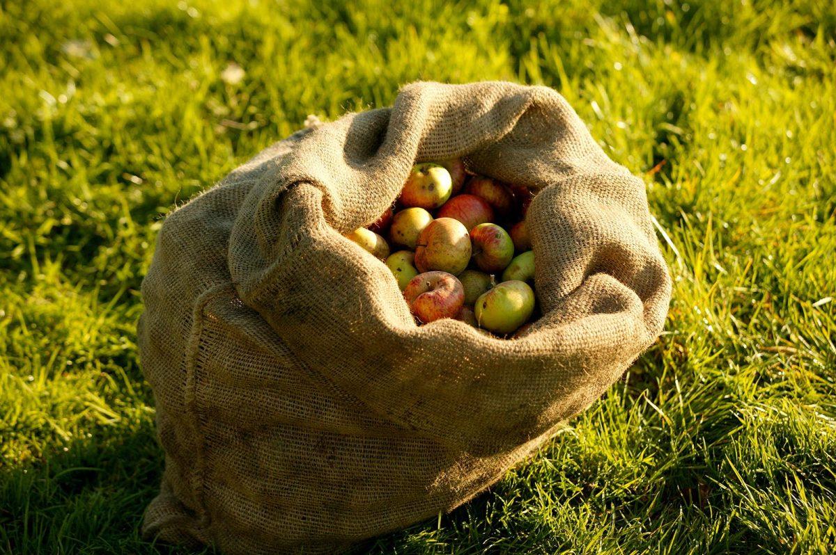 Sac de pommes