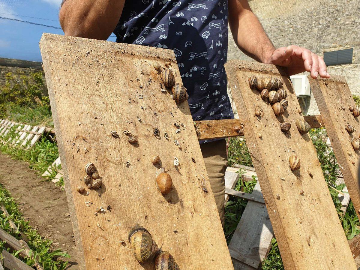 Produttore di lumache all'azienda agricola Vailly © Danielle DUMAS CRT Normandie